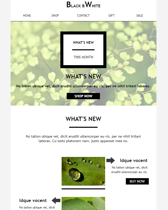 Image Rich Email Template